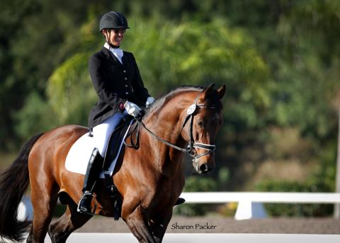 SHARON PACKER - HORSE SPORTS PHOTOGRAPHY